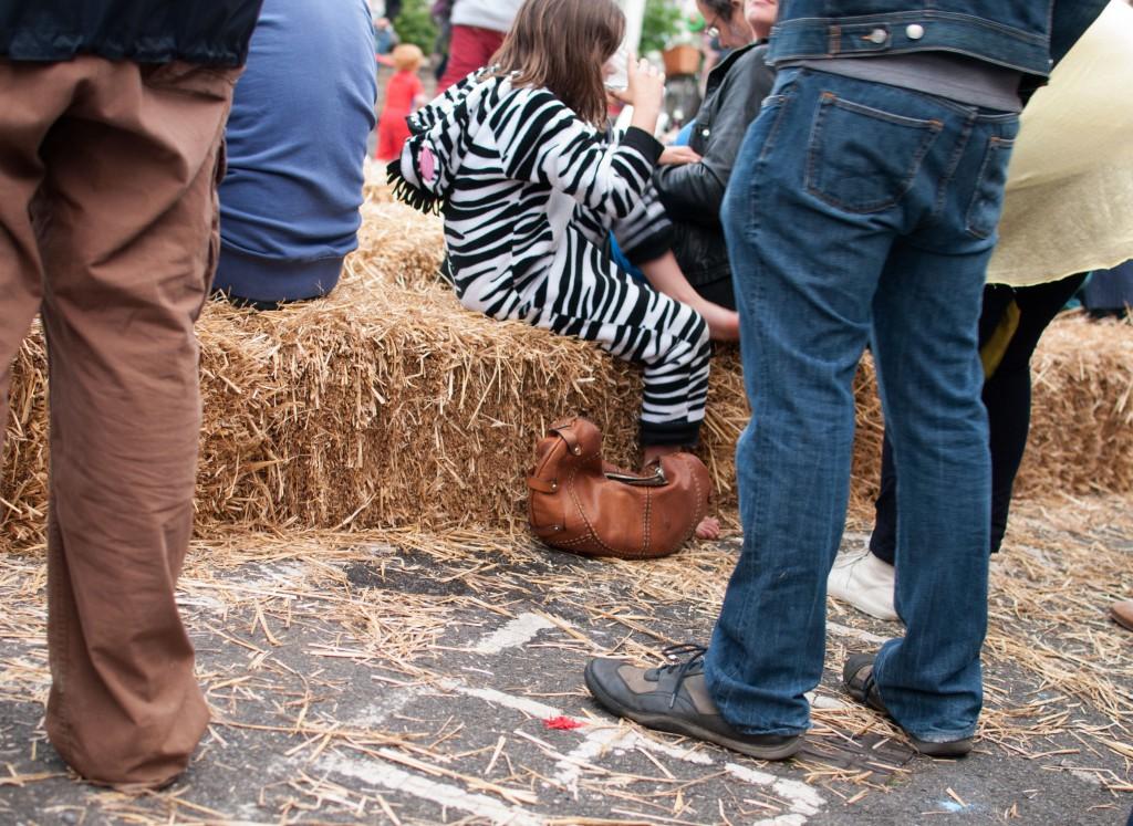 zebra in the crowd