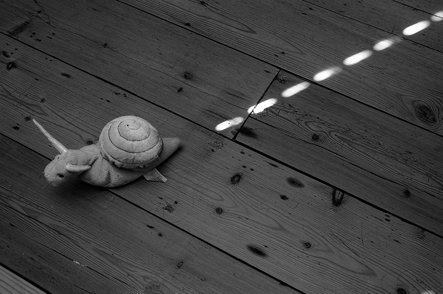 a snail has a trail of light